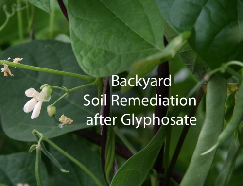 Soil remediation after glyphosate devastation