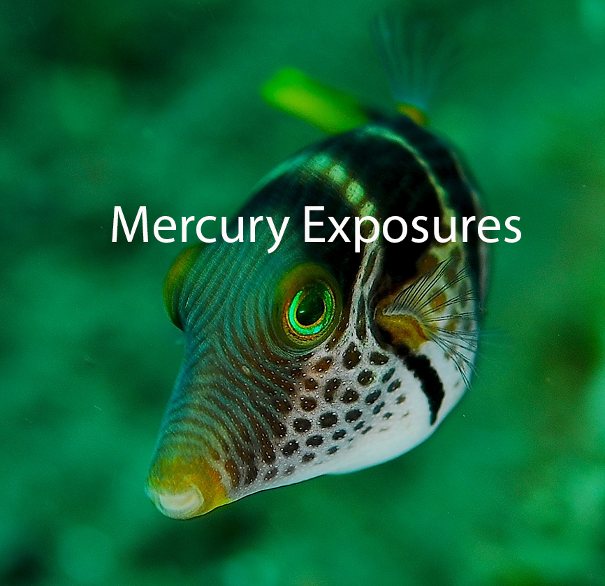 Toxno-Mercury-Exposures-Canthigaster_valentini-fish-image