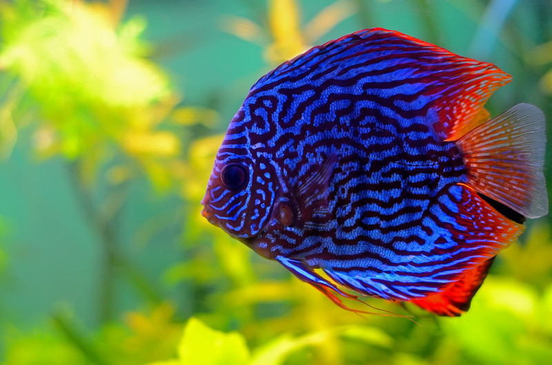 fish Toxno